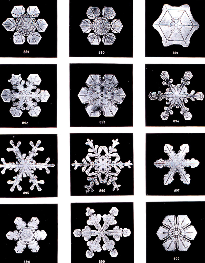 Real Snow Flakes