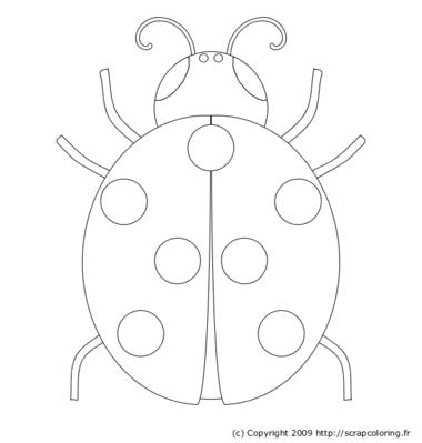 Coloriage insectes - Dessin d une coccinelle ...