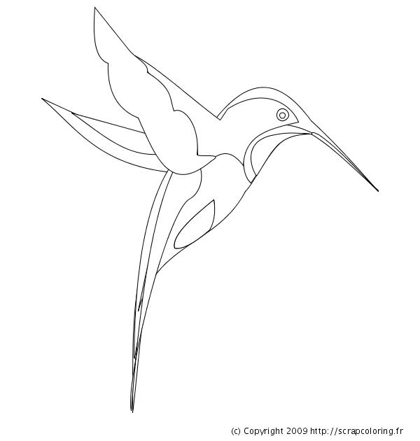 Dessin Oiseau Mouche coloriage colibri