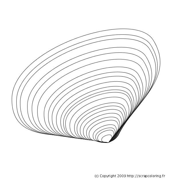 Coloriage Coquillage - Telline