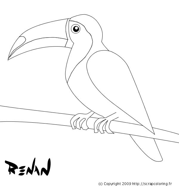 Coloriage toucan toco - Coloriage toucan a imprimer ...